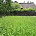 古民家の田圃
