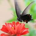 Photos: 赤と黒