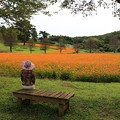 Photos: 咲き誇るコスモス