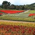 Photos: 美々しいお花畑