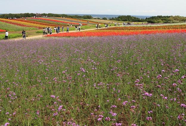 Photos: 彩りの丘