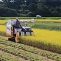稲刈り作業