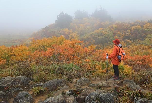 栗駒山の美妙な紅葉