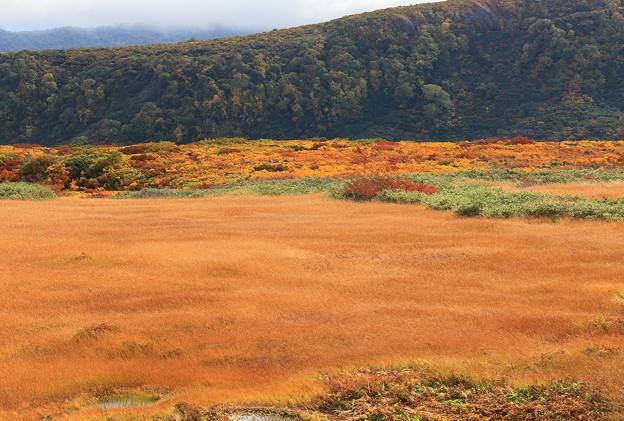 Photos: 草紅葉の美々しさ