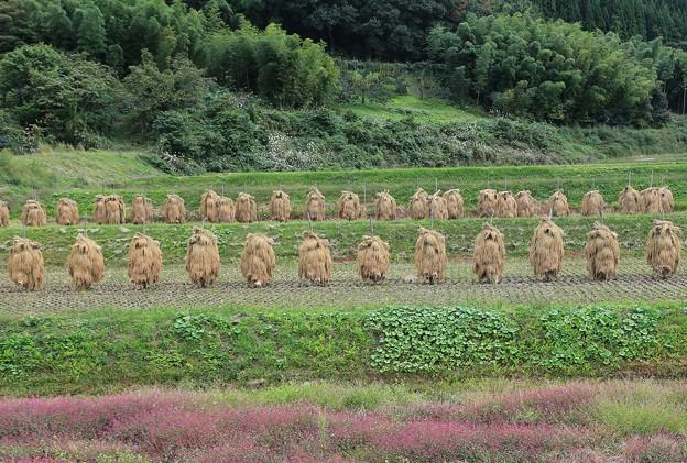 Photos: 山間部の原風景
