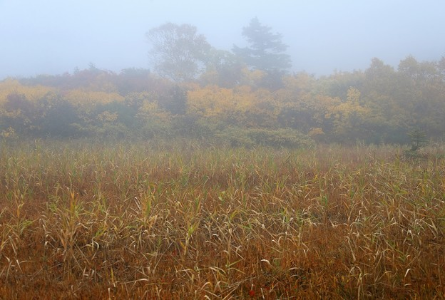 Photos: 霧に包まれて