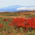 Photos: 鮮やかな紅葉