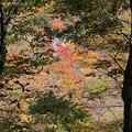 深山の紅葉美