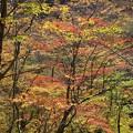 峠の林は錦色の世界