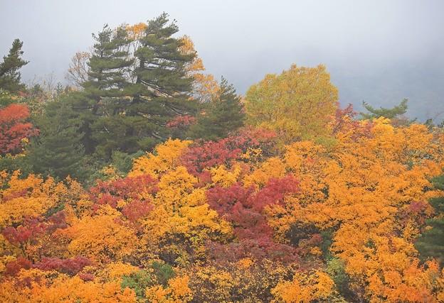 Photos: 霧の中の紅葉