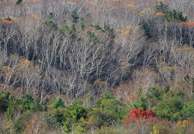 晩秋の樹海