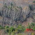 Photos: 晩秋の樹海