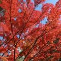 鮮やかな紅葉美