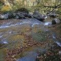 Photos: 枯れ葉散る渓谷
