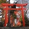 Photos: 鳥 居