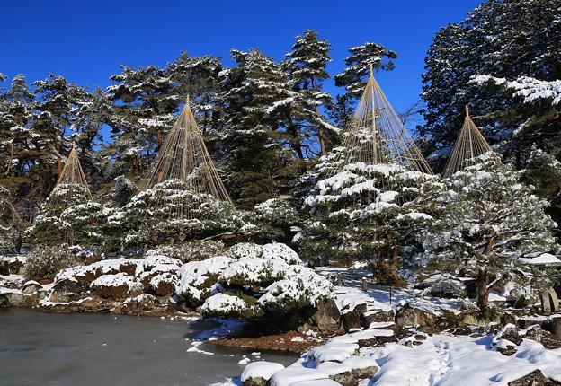 雪吊り庭園
