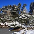 Photos: 雪吊り庭園