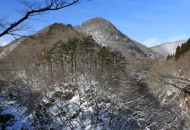 Photos: 冬の森
