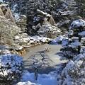 Photos: 雪の庭園