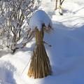 Photos: 雪帽子