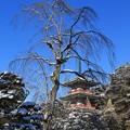 Photos: 三重塔の雪景色