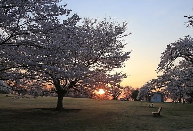 桜と朝日と