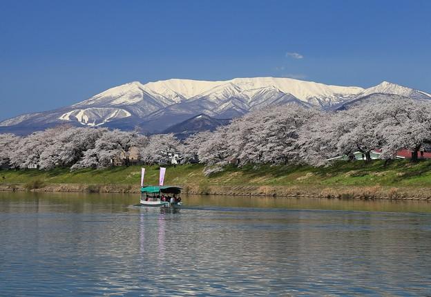 千本桜は花見船で