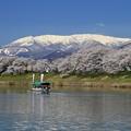 Photos: 千本桜は花見船で