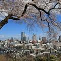 Photos: 仙台桜の季節