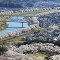 どこまでも続く桜並木