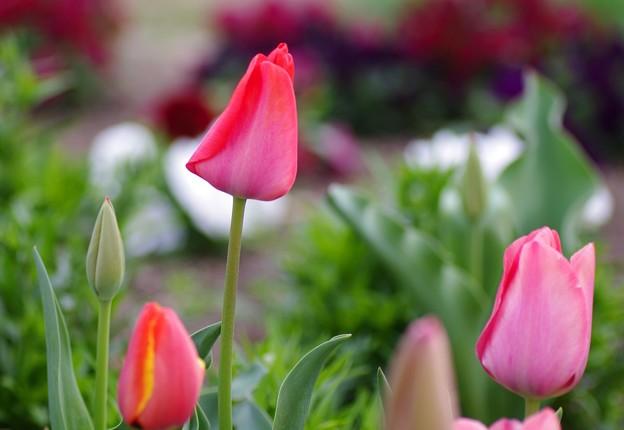 花咲く散歩道