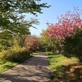天沼公園の散歩道