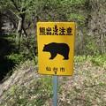 Photos: 熊出没注意