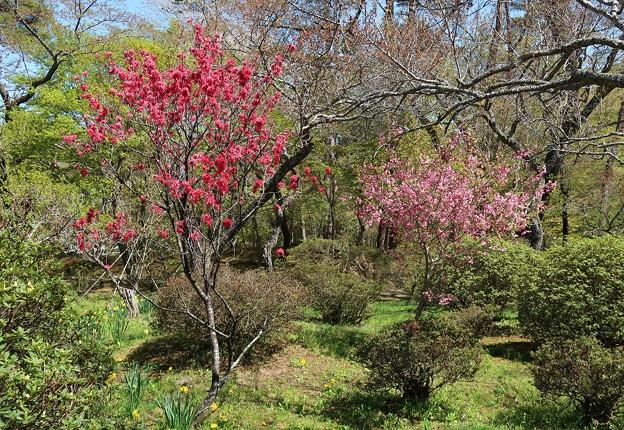 花桃の美しさ