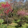Photos: 花桃の美しさ