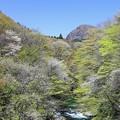 Photos: 美妙な爽やかな森