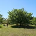 Photos: 新緑の散歩道