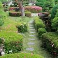 Photos: サツキ咲く庭 (一)