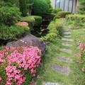 サツキ咲く庭 (二)
