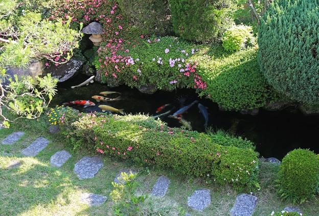 サツキ咲く庭(三)