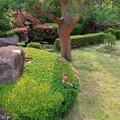 サツキ咲く庭(四)