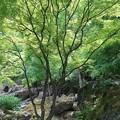 Photos: 爽やかな森
