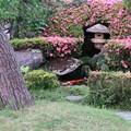 サツキ咲く庭(五)