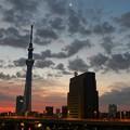 Photos: 夜明けの東京