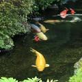 真夏を泳ぐ