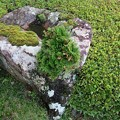 Photos: 庭 石