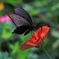 Photos: 黒と赤