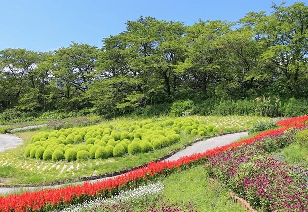 Photos: コキアの美しい公園