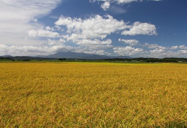 広大な田圃