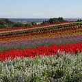 Photos: 虹の丘